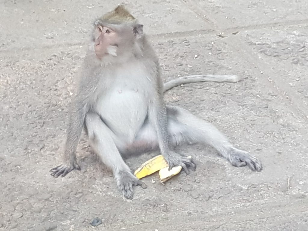 monkey sitting on the ground