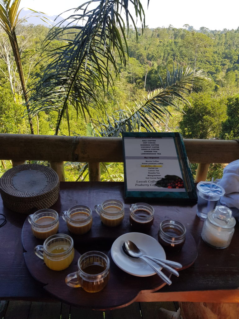 coffee plantation coffees